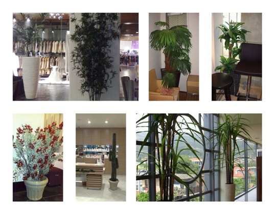 Laira φυτά του κόσμου φωτογραφιεσ